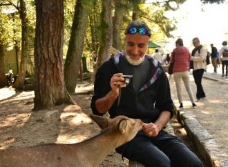 Nara ed i cerbiatti addomesticati